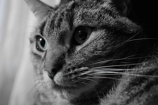 Cat, Animal, Animal Portrait, Feline, Close Up