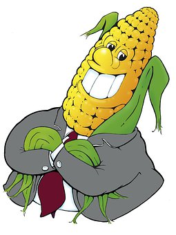 Corn On The Cob, Kukuruz, Corn, Agriculture
