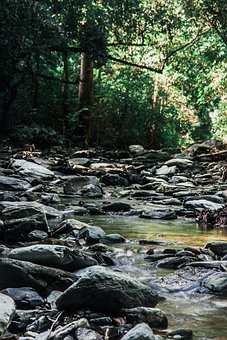 Stream, Brook, Rural, Water, Nature, Summer, Cuba