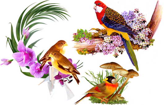 Birds, Beak, Feathers, Plumage, Flowers, Leaves, Animal