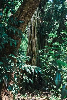 Forest, Jungle, Texture, Leaves, Landscape, Nature