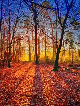 Shadow, Trees, Landscape, Autumn, Fall, Fog, Wood