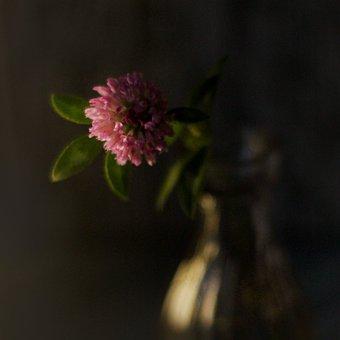 Flower, Petals, Leaves, Vase, Decoration, Decorative