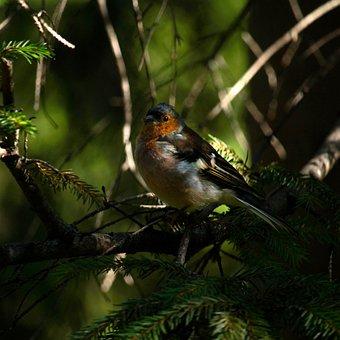 Birdie, Small, Bird, Cute, Plumage, Tree, Blue Tit