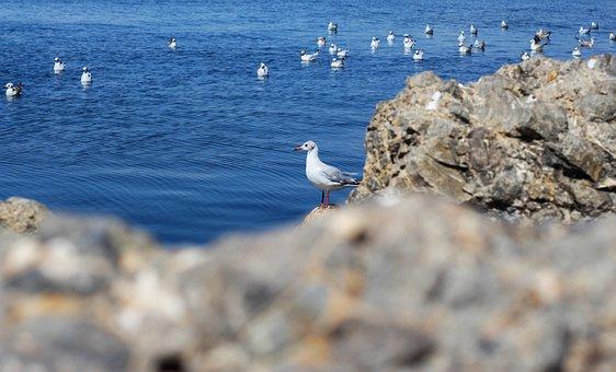 Seagulls, Sea, Gull, Wildlife, Ocean, Rocks, Birds