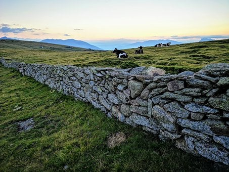 Cows, Pasture, Mountains, Wall, Stones, Stone Wall