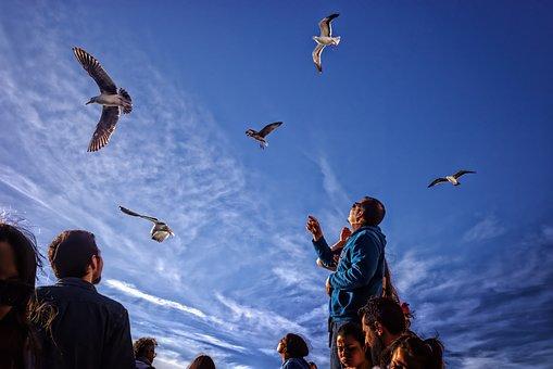 Seagulls, Gulls, Birds, Tourists, Sky