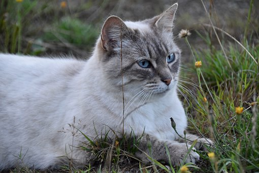 Cat, Cat On The Grass, Nature, Portrait Of Cat, Animal