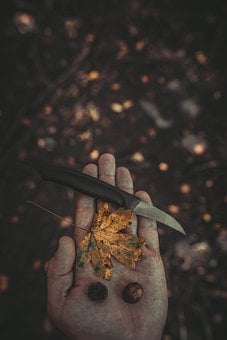 Knife, Nature, Background, Tool, Weapon, Forest