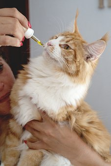 Cat, Cbd Oil, Hemp Oil, Pets, Dropper, Medicine