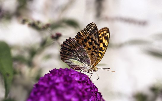 Butterfly, Insect, Nature, Flower, Wings, Purple Flower