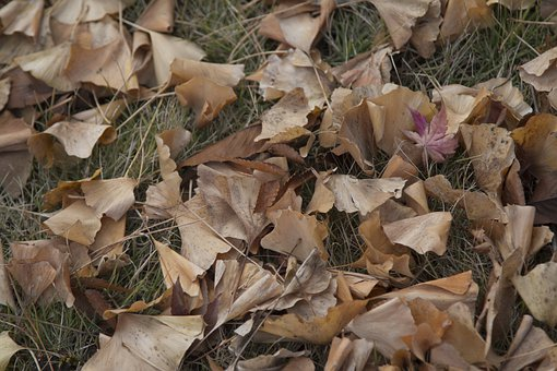 Leaves, Foliage, Grass, Ground, Fall, Dry, Garden