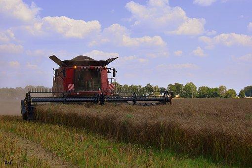 Harvester, Field, Harvest, Agriculture, Cereals