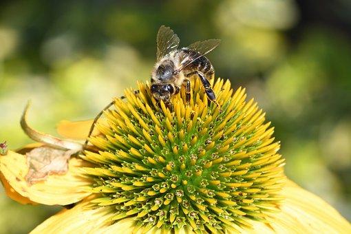 Bee, Insect, Flower, Flora, Pollen, Honeybee, Honey
