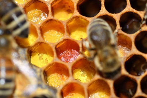 Bee, Insect, Honeybee, Honey, Beekeeper, Beekeeping