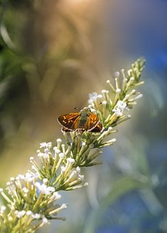 Butterfly, Insect, Nature, Kid Stories, Color