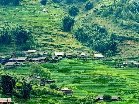 Paddy Field, Medow, Rice, Sapa, Vietnam, Lao Chai