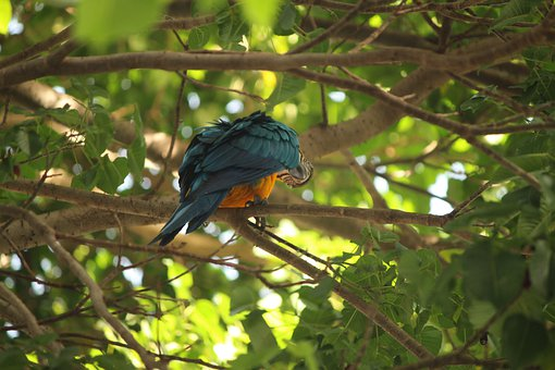 Macaw, Bird, Exotic, Colorful, Plumage, Animal