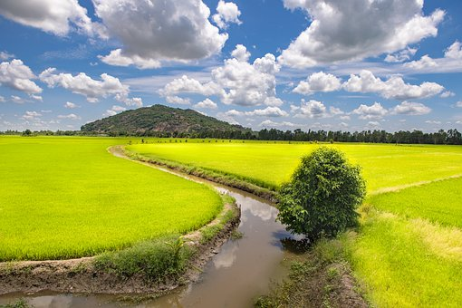 Mountain, Rice Field, Rice, Field, Land, Agriculture
