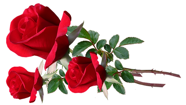 Flowers, Red, Red Roses, Stems, Bunch Of Flowers