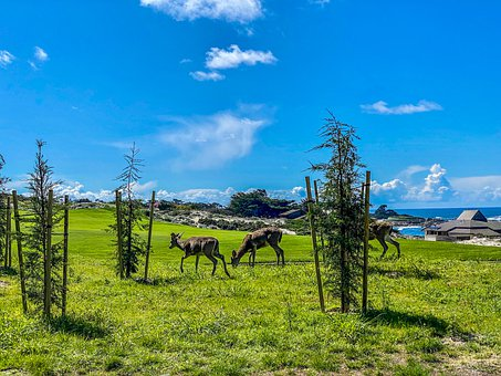 Deer, Couple, Animal, Fauna, Field, Grass, Pasture