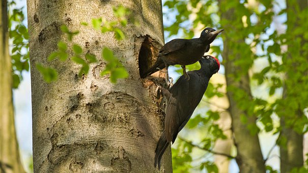 Birds, Couple, Avian, Beaks, Feathers, Plumage