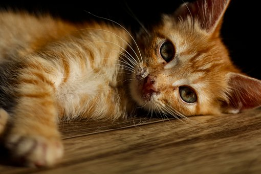 кот, Cat, Pet, Feline, Kitten, Whiskers, Domestic, Cute