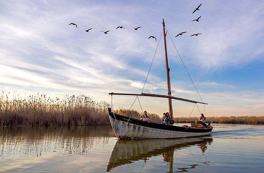 Boat, Sailboat, Lake, Reflection, Birds, Field, Grass