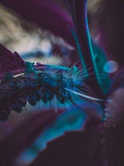 Lavender, Flower, Plants, Leaves, Garden, Nature