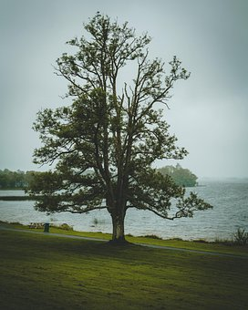 Forest, Tree, Branches, Leaves, Foliage, Grass, Sea