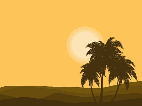 Landscape, Palm, Desert, Sunset, Sun, Trees, Nature