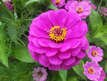 Flower, Purple, Lavender, Bloom, Plant, Blossom, Nature