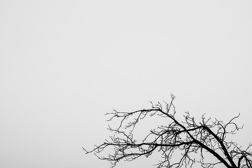 Tree, Branches, Withered Branch, Withered Tree, Nature