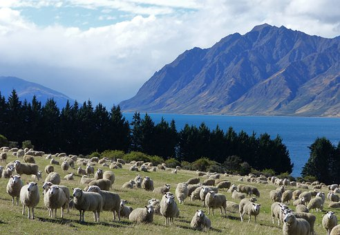 Mountains, Sheep, Lake, New Zealand, Travel, Livestock