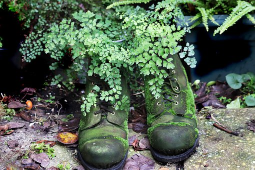 Boots, Old Boots, Old, Leather Boots, Moss, Fern