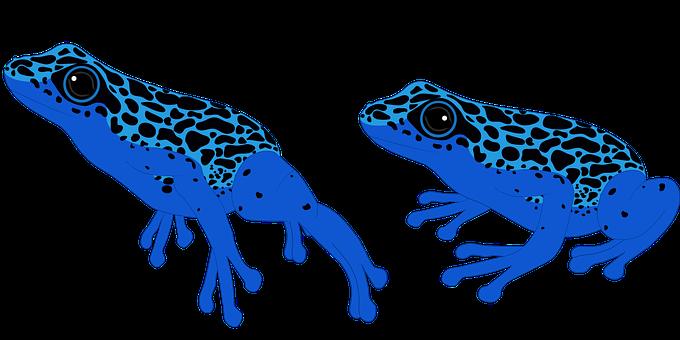 Poison Dart Frog, Frog, Amphibian, Exotic, Nature