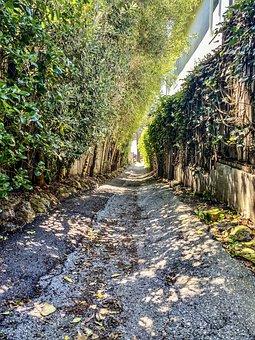 Trail, Path, Pathway, Trees, Leaves, Foliage, Rocks