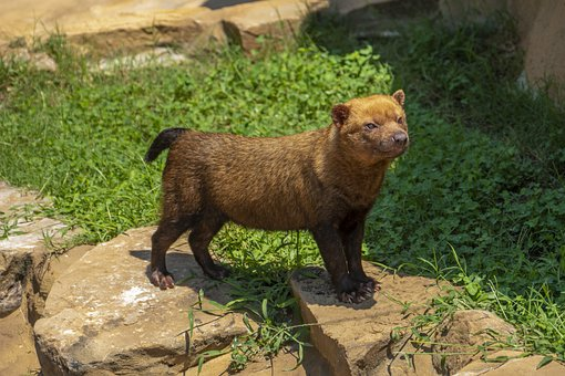 Dog, Canine, Mammal, Bush, Nature, Canid, Animal, Fur