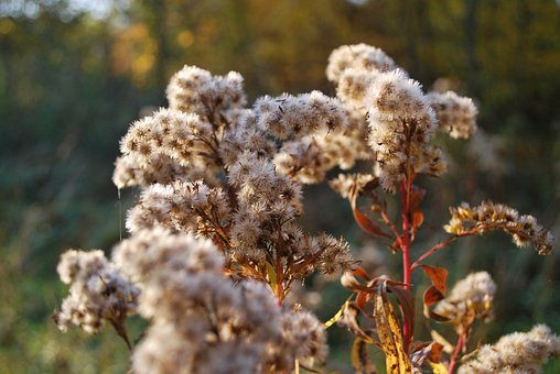Shrubs, Flowers, Foliage, Tree, Leaves, Forest, Autumn