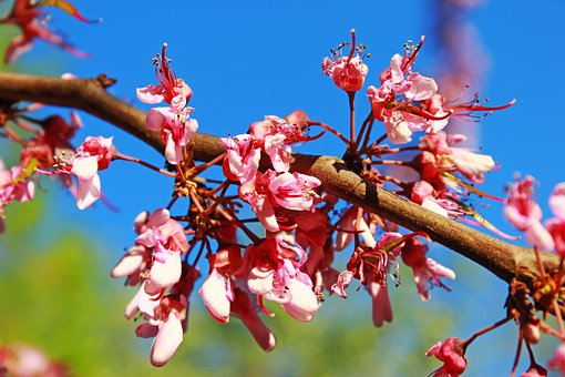 Tree, Flowers, Branch, Nature, Floral, Blossom, Bloom