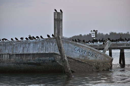 Ocean, Sea, Birds, Seagulls, Boat, Aquatic, Wildlife
