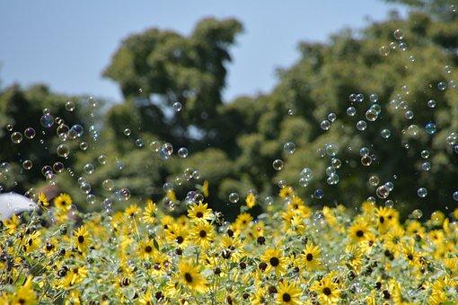 Sunflowers, Flowers, Petals, Grass, Meadow, Flower Bed