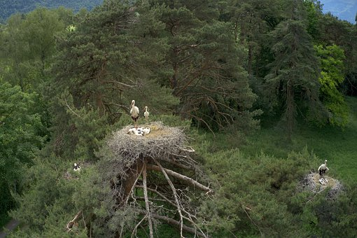 Stork, Birds, Family, Baby, Nest, Trees, Wildlife