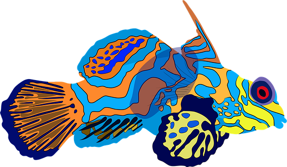 Mandarinfish, Dragonet, Fish, Sea, Underwater, Water
