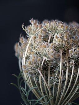 Flower, Seeds, Nature, Plant, Flora, Pollen, Delicate