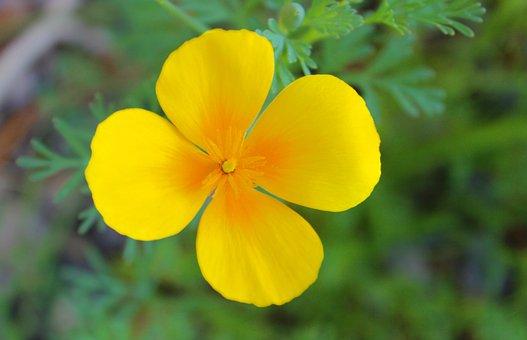 Flower, Petals, Blossom, Bloom, Flora, Sunshine, Garden