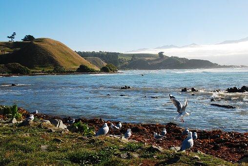 New Zealand, Kaikoura, Sea, Nature, Water, Ocean
