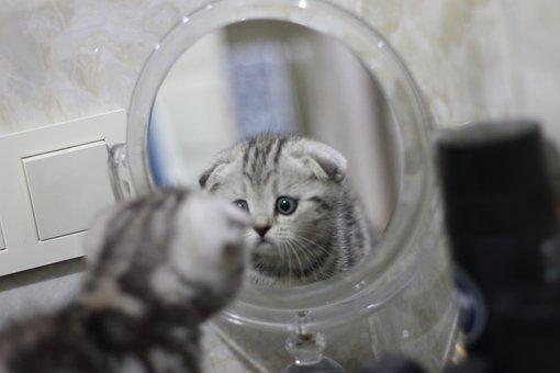The Kitten Looks In The Mirror, Reflection Kitten