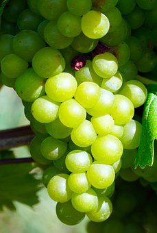 Grapes, Wine, Grapevine, Ripe, Winegrowing