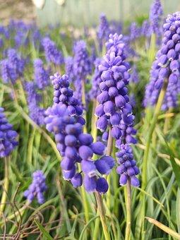 Flowers, Spring, Garden, Bloom, Kashmir, Dark
